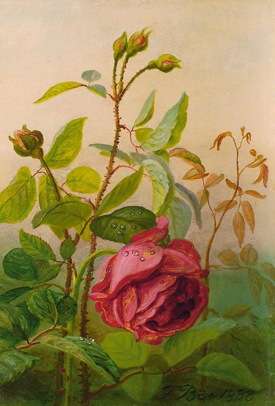 Frants_Bøe_-_Rod_rose,_1888